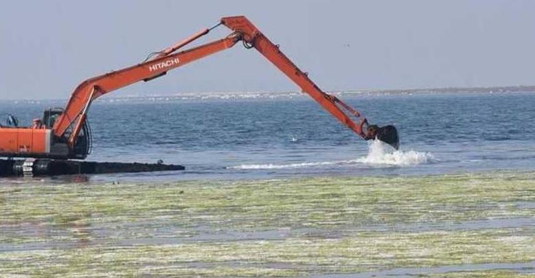 ظاهرة بيئية على سواحل غرب تركيا تضع السكان في خطر