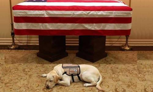 صورة تمثل الوفاء.. كلب بوش لا يتخلى عنه حتى بعد وفاته