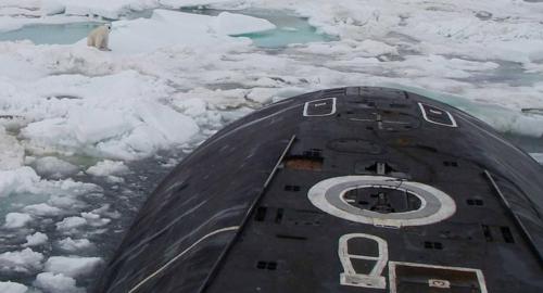 شاهد بالصور.. دب قطبي يقلق غواصة نووية روسية