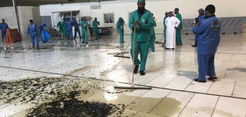 السعودية.. توضيح بخصوص فيديو الحشرات في باحات الحرم المكي