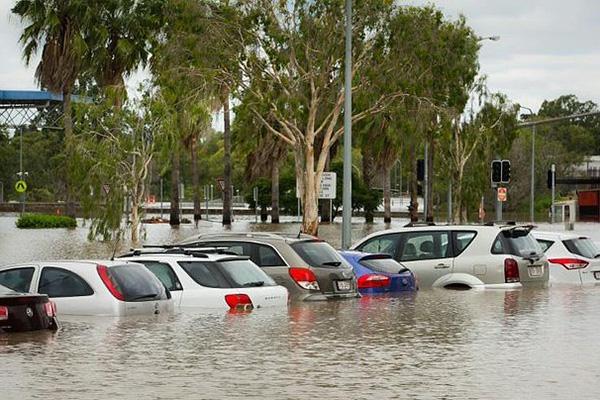 شاهد بالفيديو.. تماسيح في شوارع أستراليا عقب الفيضانات