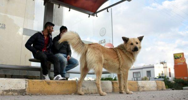 وفاء كلب انتظر أصحابه سنة كاملة في المكان ذاته