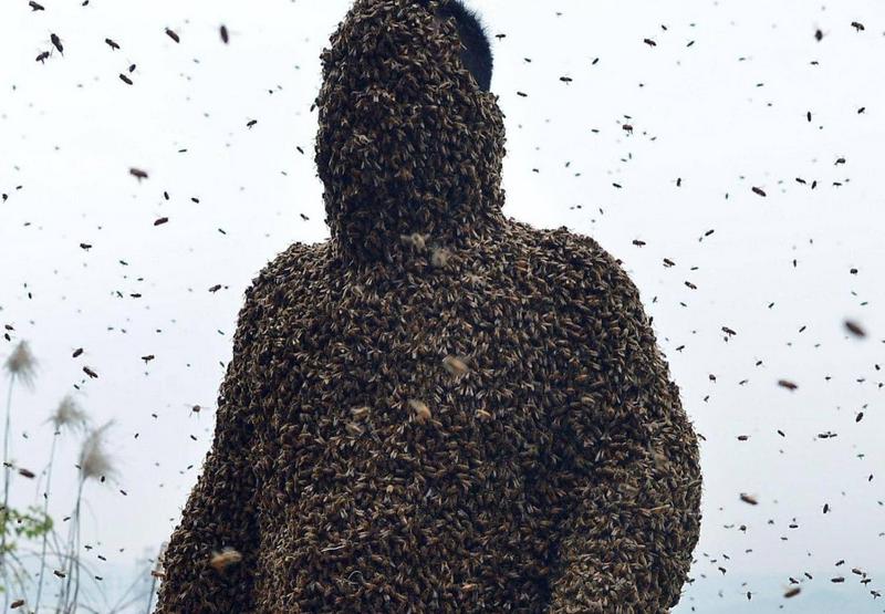 يجمع العسل ويأكل من النحل مباشرة.. إياكم والتقليد