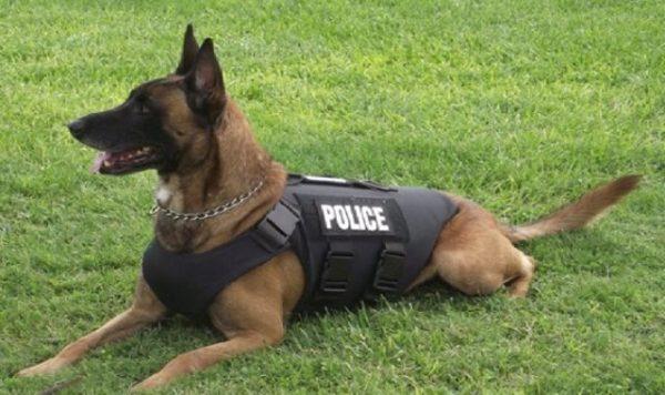 كلب بوليسي يفشل عمليات تهريب أموال ضخمة