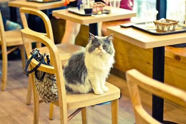 مقاهي للقطط في مدينة طوكيو