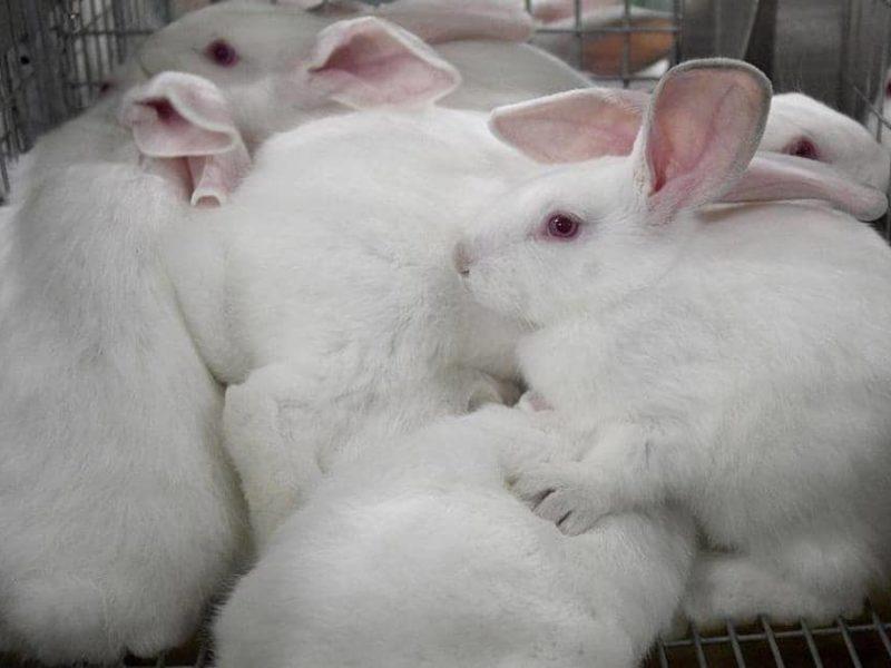 حفل 4 دقائق جنى على 10 آلاف أرنب