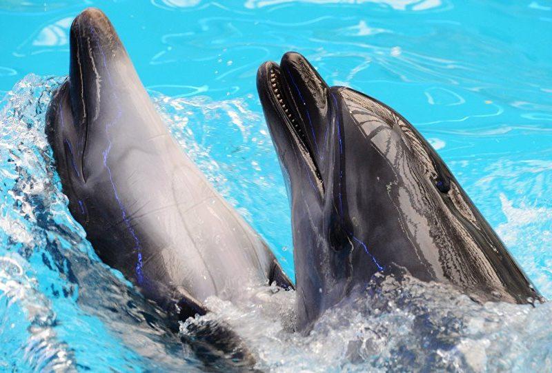 نفوق الدلافين في أمريكا يثير دهشة العلماء