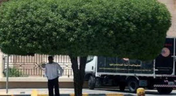 دولة عربية تسجل أعلى درجة حرارة في العالم